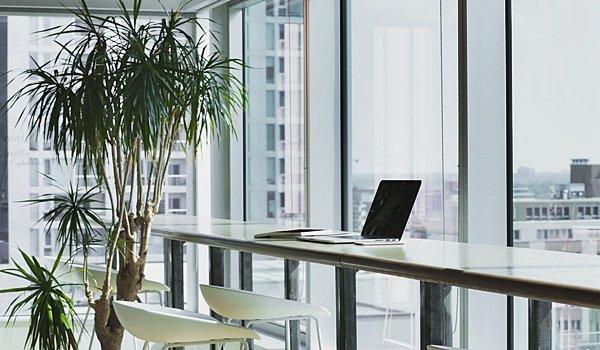Ofislerde Bitkilerin Etkisi Nedir?